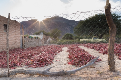 Driving to Cachi, we passed several houses that were drying their red pepper harvests.