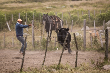 On a drive to Tafi del Valle, I stopped to take a few pictures of some cowboys at work.